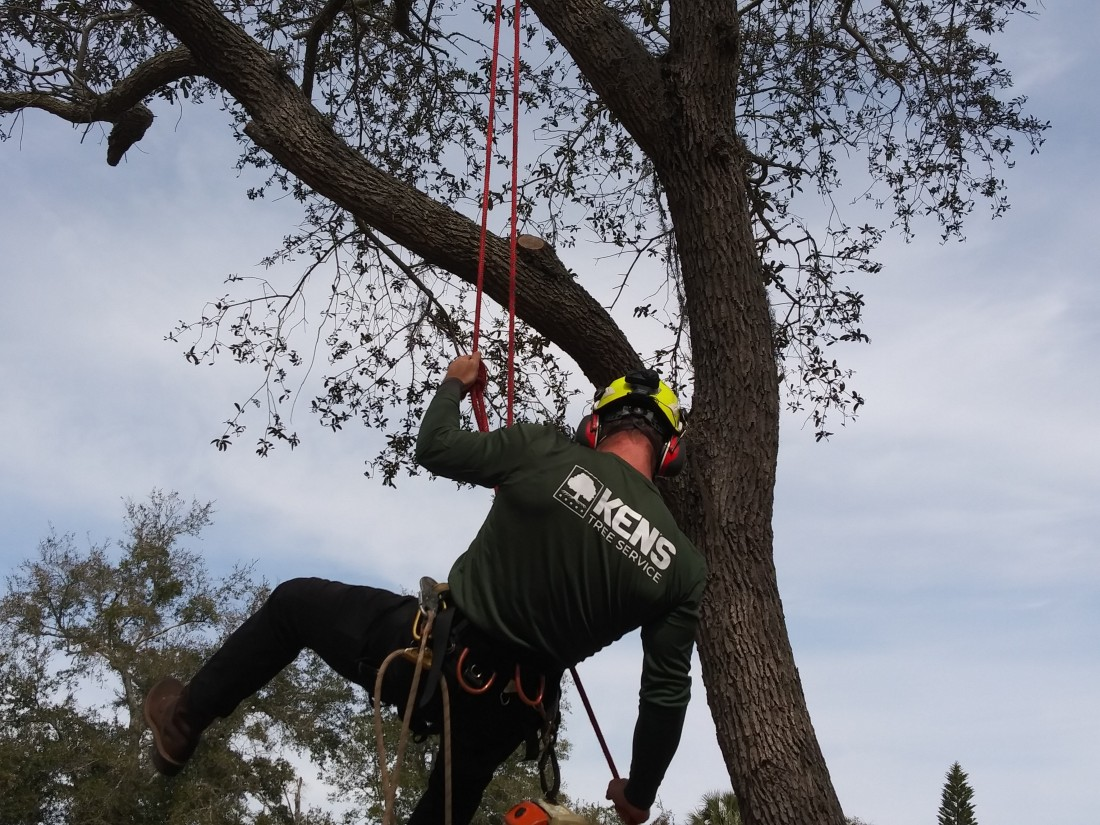Additional Tree Services: Pruning & Upkeep | Ken's Tree Service - IMG_20190130_131637