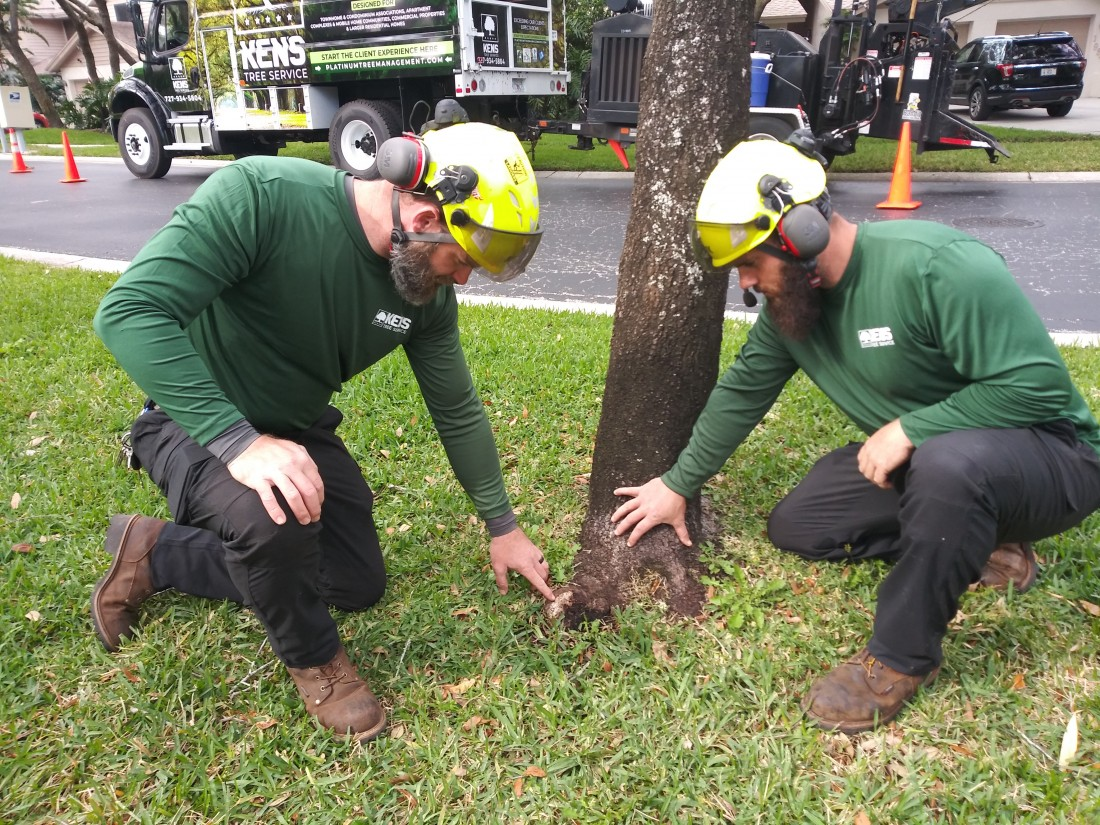 Tree Services: Tarpon Springs, FL  | Ken's Tree Services - IMG_20190130_150010