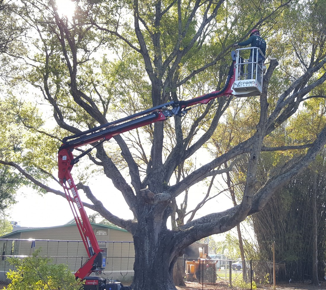 Tree Services: Tarpon Springs, FL  | Ken's Tree Services - Tree_Removals_Picture_-_new_lift