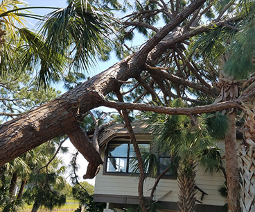 Fallen Tree and Branch Storm Cleanup | Ken's Tree Service - storm