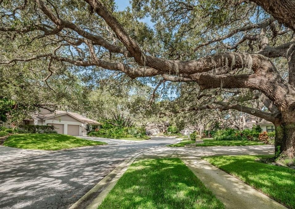 Tree Services: Tarpon Springs, FL  | Ken's Tree Services - whispering_woods_file_photo