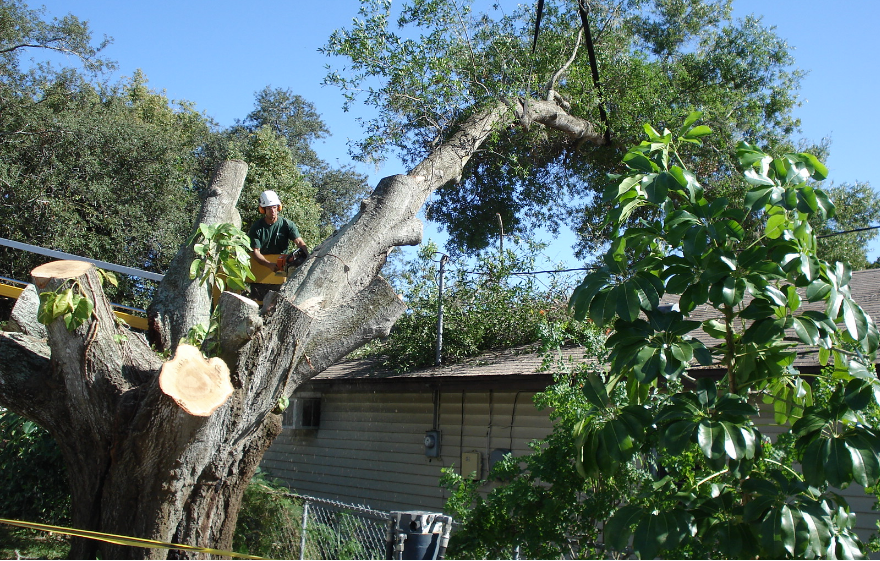 Tree Services: Tarpon Springs, FL  | Ken's Tree Services - service-removal-bg