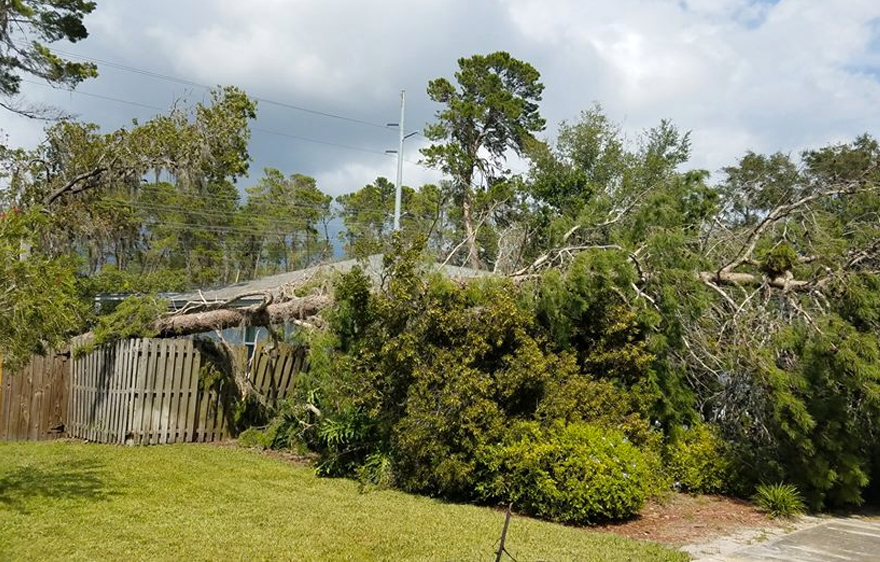 Tree Services: Tarpon Springs, FL  | Ken's Tree Services - service-storm-bg